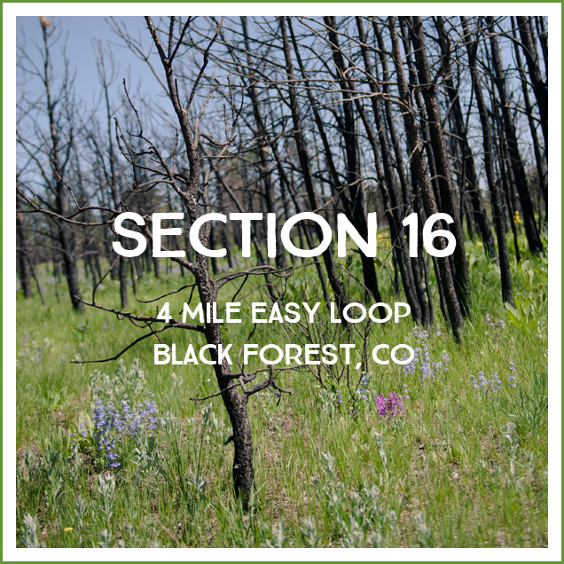 section_16_hike_review